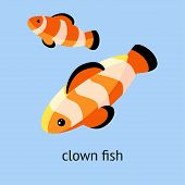 Clown Fish On The Blue Background. Vector Illustration Of Reef Fish, Clown Fish Or Anemone Fish poster
