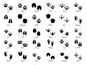 Animal Footprints. Walking Track Animals Paw With Name, Pets Tracks, Bird And Wild Animals Trail, Wi poster