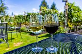 Two Different Wines, Glasses Of Clear White And Dark Red Wine On Winery Tasting Outdoor Yard Seating poster