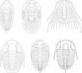 stock photo of paleozoic  - Trilobite arthropod mollusk geology paleozoic archeology prehistoric - JPG