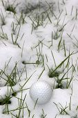 Single Dimpled Golf Ball In The Snow Covered Grass
