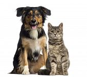 foto of vertebrate  - Cat and dog sitting together - JPG