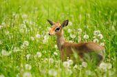 stock photo of bambi  - Bambi - JPG
