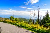 foto of gatlinburg  - Beautiful sunny spring day along the Clingmans Dome Trail - JPG
