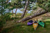 picture of kayak  - Sea kayaks summer ready at shore behind pine trees Scandinavia Denmark Havnsoe  - JPG