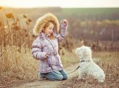 picture of westie  - happy girl with her dog breed White Terrier walking in a field in autumn - JPG