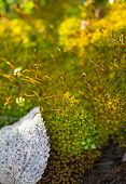picture of vegetation  - macro picture of vegetation background grass moss natural - JPG