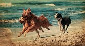 foto of dog teeth  - vitage photograph of a dog playing in the beach - JPG