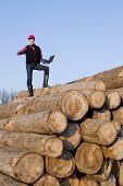 foto of lumber  - Young lumber engineer standing with laptop on cut trunks - JPG