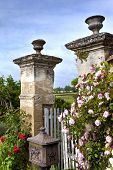picture of charming  - Rosebuds and charming garden in the countryside - JPG
