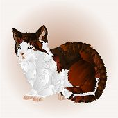 picture of kitty  - Kitty three color sitting pussy feline vector illustration - JPG