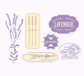 Постер, плакат: Vintage lavender background aromatherapy and spa packaging design