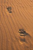 picture of footprints sand  - Background of close up sand structures with footprints - JPG