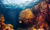 picture of fish  - Underwater shot of the coral reef with fishes - JPG