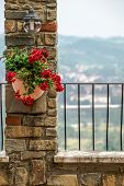 foto of flower pot  - flowers in a pot on a stone wall under the lamp - JPG