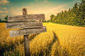 pic of track field  - Golden crop field scenery with tire tracks - JPG