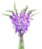 stock photo of gladiolus  - bouquet of  fresh gladiolus flowers close up isolated on white background - JPG