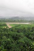 image of rainforest  - Rainforest - JPG