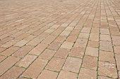 picture of weed  - Block paving pattern - JPG