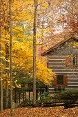 image of fall leaves  - log home in the woods with bright golden leaves on trees - JPG
