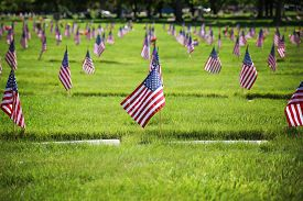 pic of veterans  - flag on the graves of soldiers on veterans day in a cemetary - JPG