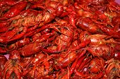 stock photo of crawdads  - Cajun crawfish located in the heart of cajun country - JPG
