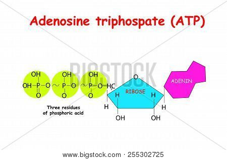 Adenosine Triphosphate atp On White