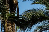 Beautiful Spreading Palm Tree, Exotic Plants Symbol Of Holidays, Hot Day, Big Leaves poster