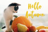 Hello Autumn Text, Seasons Greeting Card Concept. Welcome Fall Sign.cute Kitty And  Pumpkin, Zucchin poster