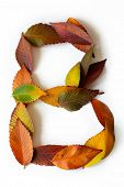 Letter B of colorful autumn leaves. Character B mades of fall foliage. Autumnal design font concept. poster