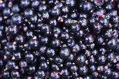 Black Currant. Background Of Berries. Fresh Organic Currant From A Rural Garden. Organic Currant Ber poster