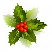 image of holly  - nice Christmas holly branch - JPG