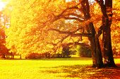Fall Picturesque Landscape. Fall Trees With Yellowed Foliage In Sunny October Park Lit By Sunshine.  poster