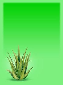 picture of aloe-vera  - Green Background with Aloe Vera - JPG