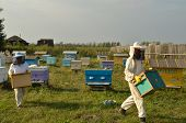 Bee keepers are stealing the honey from bees