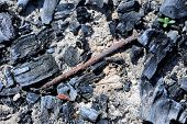Old Rusty Nail In Fire Pit With Coal And Ash