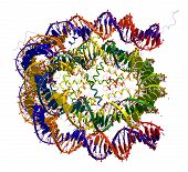 picture of crystallography  - Nucleosome core particle structure on a white background - JPG