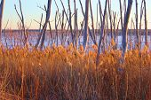 picture of tallgrass  - Tallgrass and trees on wetland with a frozen lake beyond taken at Cedar Bluff State Park - JPG