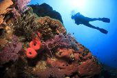 pic of biodiversity  - Scuba Diving on coral reef underwater - JPG