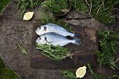 stock photo of fish  - Healthy eating - JPG