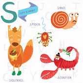stock photo of animal x-ray  - Alphabet design in a colorful style - JPG