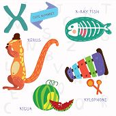 pic of animal x-ray  - Alphabet design in a colorful style - JPG
