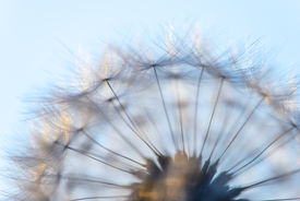 picture of blown-up  - blown dandelion flower head close up against the sky - JPG