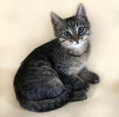 pic of yellow tabby  - Tabby and white kitten lying on yellow background - JPG
