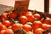 stock photo of jack-o-laterns-jack-o-latern  - container of small pumpkins - JPG