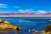 stock photo of desert animal  - Atacama Desert with Flamingos - JPG