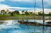 foto of wetland  - Amazing Pantanal River  - JPG