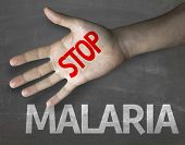 stock photo of malaria parasite  - Creative composition with the message Stop Malaria - JPG