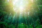 foto of spooky  - Bright sun in green forest - JPG