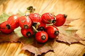 picture of dog-rose  - Hawthorn and maple leaf on wooden rustic table background - JPG